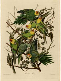 Affiche du film Birds of America